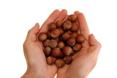 Hazelnuts in hand. Image of hands holding hazelnuts over white background Royalty Free Stock Photos