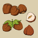 Hazelnuts in hand-drawn style. Stock Photography