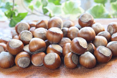 Hazelnuts. A handful of hazelnuts with a blurred background Stock Photos