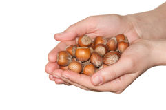 Hazelnuts in hands. Against white Stock Image