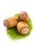 Hazelnuts with hazelnut leaf on white background Stock Images