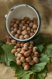 Hazelnuts. In ametal cup  on a leaf background Stock Photography