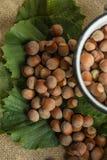 Hazelnuts. On a leaf background Stock Photos