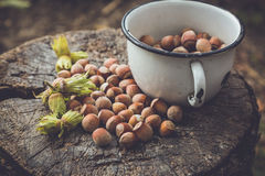 Hazelnuts. In a metal cup on a old wooden background Royalty Free Stock Images