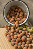 Hazelnuts. In a metal cup on a paper background Stock Photography