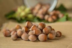 Hazelnuts. On a paper background Stock Photography