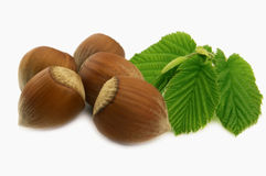 Hazelnuts and his leaves Stock Photos