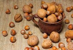 Hazelnuts i orzech włoski Obrazy Stock