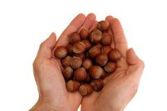 Hazelnuts In Hand Royalty Free Stock Photos