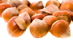 Hazelnuts (isolated). Some hazelnuts isolated on white background (shallow depth of field stock photos