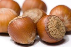 Hazelnuts isolated. On white close-up Stock Image