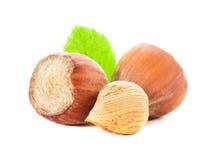 Hazelnuts isolated Royalty Free Stock Images