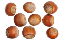 Hazelnuts, isolated Stock Photo