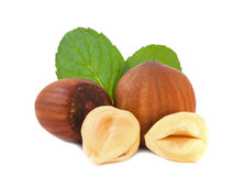 Hazelnuts isolated Royalty Free Stock Photos