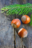 Hazelnuts isolated on a table wood Stock Photos
