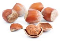 Hazelnuts isolated on white Stock Photos
