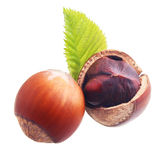 Hazelnuts isolated. Royalty Free Stock Photo