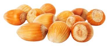 Hazelnuts isolated on the white background Stock Photo