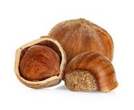 Hazelnuts isolated on a white Stock Image