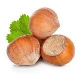 Hazelnuts isolated on white Royalty Free Stock Images