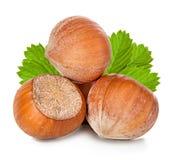 Hazelnuts isolated on white Stock Photo