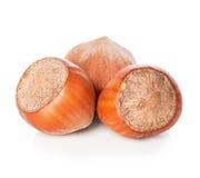 Hazelnuts isolated on white Stock Photography