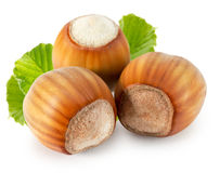 Hazelnuts isolated on the white background Stock Photography