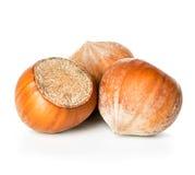 Hazelnuts isolated on a white background Stock Image
