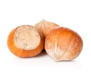Hazelnuts isolated on a white background Stock Images
