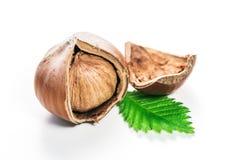 Hazelnuts isolated Stock Image