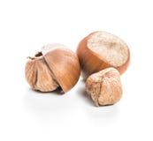Hazelnuts isolated Stock Photos