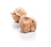 Hazelnuts isolated Stock Photography