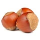 Hazelnuts Isolated on White Background Royalty Free Stock Image