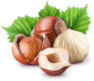 Hazelnuts. Royalty Free Stock Photography