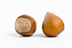 Hazelnuts isolated on white background. Macro image Royalty Free Stock Images