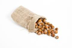 Hazelnuts isolated on white background. Macro image Stock Photos