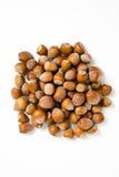 Hazelnuts isolated on white background. Macro image Royalty Free Stock Photo