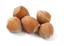 Hazelnuts isolated on white background. Macro phot Stock Image