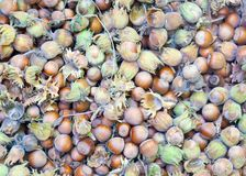 Hazelnuts.Just from the forest Stock Photos