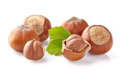 Hazelnuts kernel Stock Image