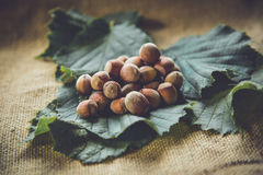 Hazelnuts. On a leaf background Stock Photography
