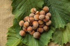 Hazelnuts. On a leaf background Royalty Free Stock Photography
