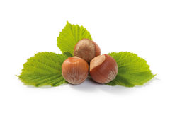 Hazelnuts and leaf Composition Stock Image