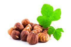 Hazelnuts with leaf isolated on white background Stock Photo