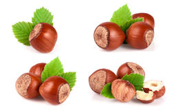 Hazelnuts with a leaf isolated on white background. Set or collection Royalty Free Stock Image