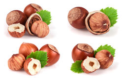 Hazelnuts with a leaf isolated on white background. Set or collection.  royalty free stock image