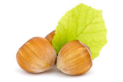 Hazelnuts with leaf Royalty Free Stock Image