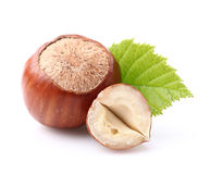 Hazelnuts with leaf Stock Image
