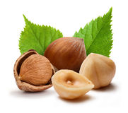 Hazelnuts and leafs Royalty Free Stock Photo