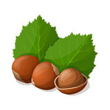 Hazelnuts with leafs  on white. Stock Image